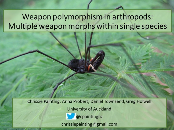 Weapon polymorphism in arthropods_front slide