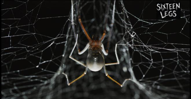 A female cave spider on her web (Photo: Joe Shemesh, used with permission from Bookend Trust)
