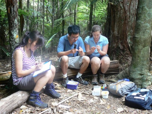 Working on inverts in the forest is fun! Here I am with my field assistants painting and measuring weevils.