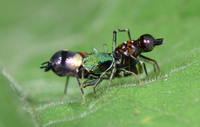 Mating pair.jpg