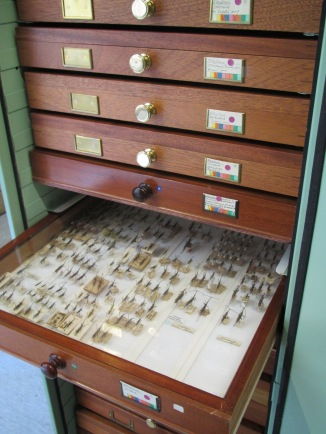 A drawer of pinned brentine weevils